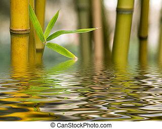 воды, бамбук, отражение