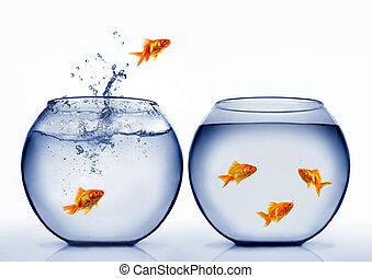 воды, золотая рыбка, прыжки, вне
