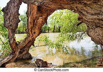 воды, старый, дерево