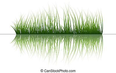 воды, трава