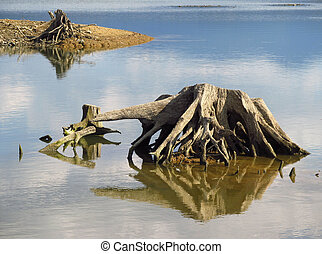 воды, stumps