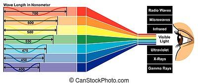 волна, видимый, длина, диаграмма, легкий
