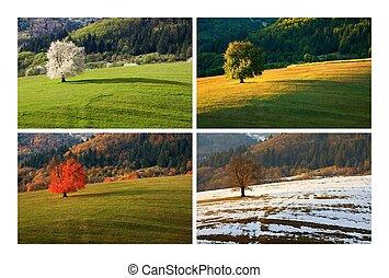 время года, вишня, дерево, 4