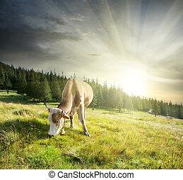 выгон, бежевый, корова