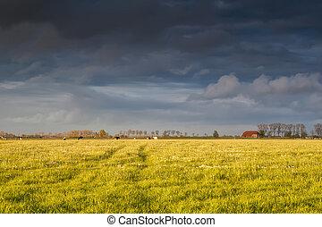 выгон, дом, до, закат солнца, крупный рогатый скот