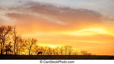 выгон, лошадь, закат солнца, кентукки