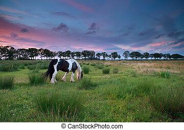 выгон, лошадь, закат солнца, клевок