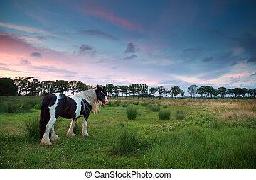выгон, лошадь, закат солнца