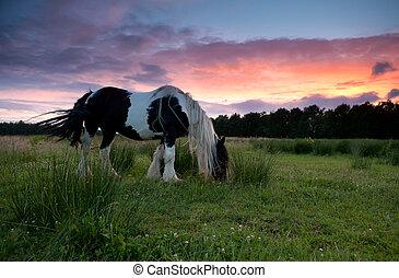 выгон, лошадь, закат солнца, grazing