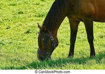 выгон, лошадь
