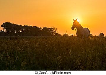 выгон, лошадь, grazing
