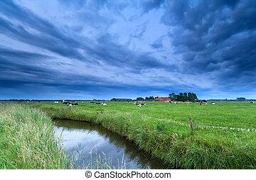 выгон, река, крупный рогатый скот