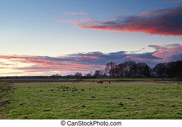 выгон, (highland, крупный рогатый скот, cattle), шотландский