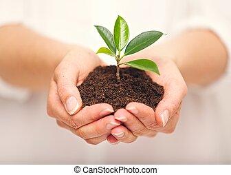 выращивание, почва, растение, горсть, молодой
