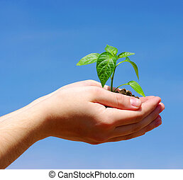 выращивание, растение, зеленый