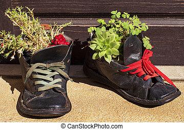 выращивание, старый, башмак, plants, flowerpots., обувь, кожа, tattered