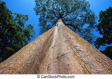 высокий, дерево