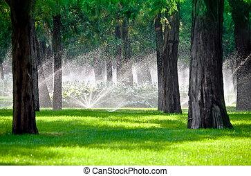 газон, дерево, разбрызгиватель