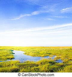 газон, идиллический, солнечный лучик, поток