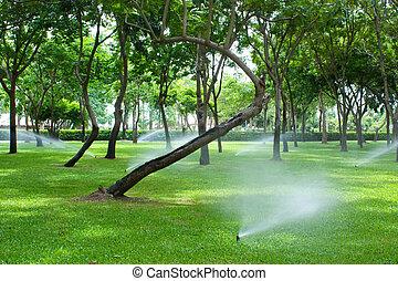 газон, полив, парк, разбрызгиватель