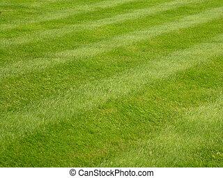газон, трава, mown