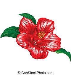 гибискус, белый, цветок, красный, задний план