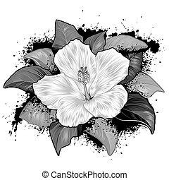 гибискус, белый, цветок, рисование