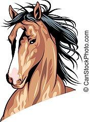 глава, лошадь, коричневый