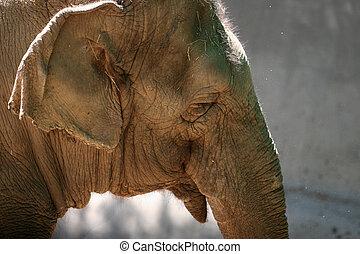 глава, слон