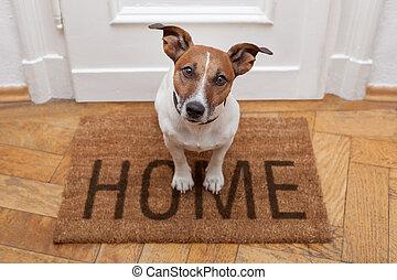главная, добро пожаловать, собака