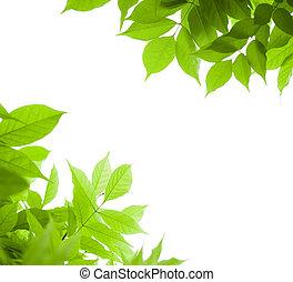 глицинии, угол, над, -, страница, зеленый, задний план, лист, белый, граница, leaves