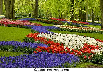 голландия, весна, цветы, сад