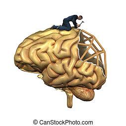 головной мозг, реконструкция