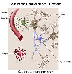 головной мозг, cells