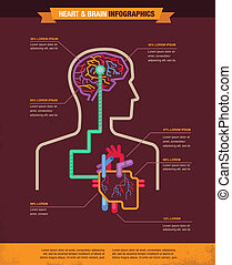головной мозг, infographic, связанный, сердце