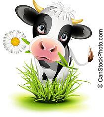 гольштейн, трава, корова