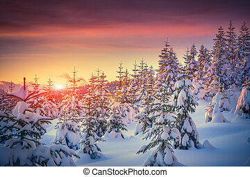 гора, зима, красочный, восход, пейзаж, лес