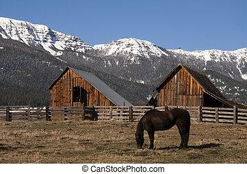 гора, лошадь, натуральный, домашний скот, ранчо, дерево, сарай, grazing, зима