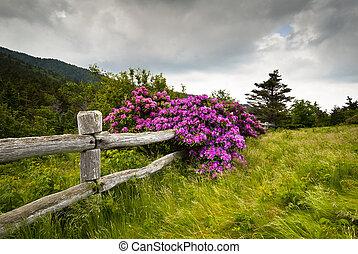 гора, рододендрон, цветок, забор, природа, деревянный, парк, разрыв, государство, чалый, на открытом воздухе, carvers, blooms