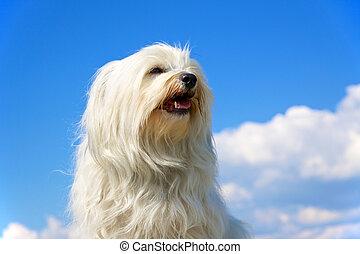 гордый, собака