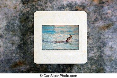 горка, дельфин, фильм