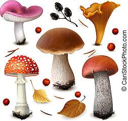 грибы, вектор, задавать
