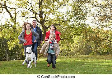 гулять пешком, семья, парк, молодой, собака, через, на открытом воздухе