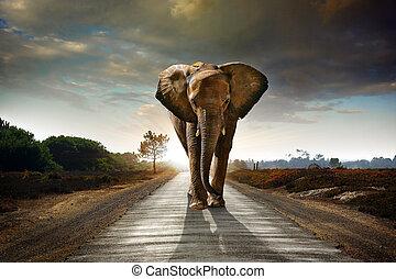 гулять пешком, слон