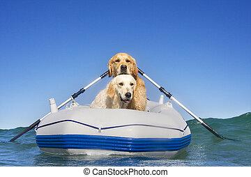 два, лодка, dogs