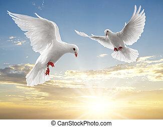 два, doves