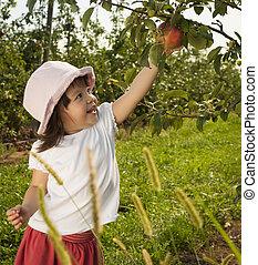 девушка, picking, яблоко