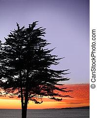 дерево, закат солнца