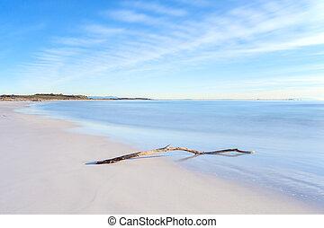 дерево, закат солнца, филиал, время, белый, пляж