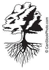 дерево, корень
